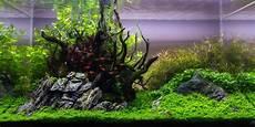 ada aquascape mot ada 90p aquascape no 4 nature s centerpiece your