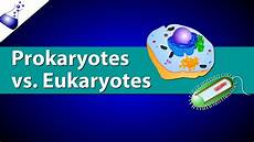 Prokaryotes Vs Eukaryotes Prokaryotic Vs Eukaryotic Cells Youtube
