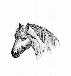 pferde 00024 gratis malvorlage in pferde tiere ausmalen
