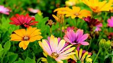 Flower Wallpaper Pictures by Wallpaper Flowers Colorful Hd 5k Flowers 5999
