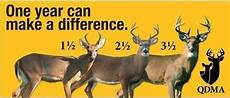 Deer Antler Age Chart Just Sayin Deer Hunting Deer Hunting Tips Deer