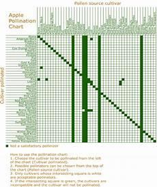 Apple Tree Pollination Chart Apple Pollination Synchronization Chart 40 Download
