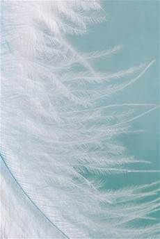 iphone blue feather wallpaper white feather on pale blue color iphone wallpapers 2