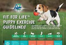Puppy Exercise Chart Puppy Exercise Guideline Poster 5 Pack Avidog Zink Ventures