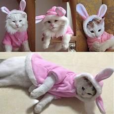 cat clothes for rabbit design pet clothes winter cat clothes pet
