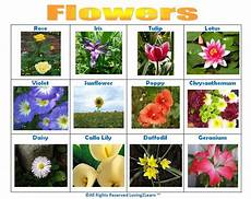 Flower Chart With Names And Pictures Print Off This Quot Flowers Quot Chart Www Loving2learn Com