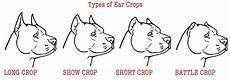 Bully Ear Crop Chart Cropping Your Dog S Ears The Pros And Cons