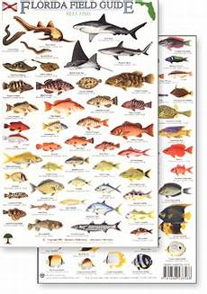 Florida Fish Id Chart Florida Field Identification Guides By Rainforest Publications