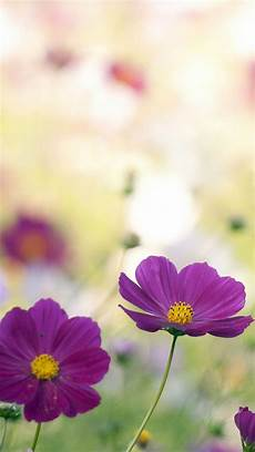 Flower Cell Phone Wallpaper by Animated Wallpapers For Mobile Phones 48 Images