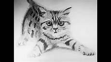 dibujos de gatos c 243 mo dibujar un gato a realista draw a realistic cat