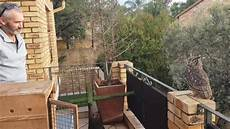 wenke pot idees pappa the pot plant owl release thanks owl rescue