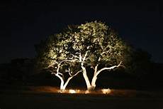 Tree Lights From Palms To Oaks We Ve Can Light Your Trees In The