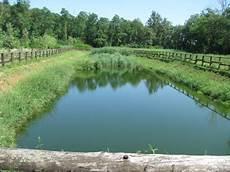 focus on acqua 1 dottor focus on acqua 3 la fitodepurazione dottor ambiente