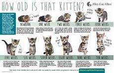Kitten Eating Chart How Old Is That Kitten Kitten Progression At A Glance