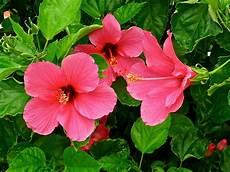harmoni rambut dan sepatu bunga sepatu untuk kecantikan souletz