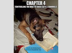 1000  images about German Shepherd Dogs on Pinterest   Lol