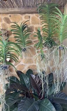 plantas penduradas ao ar livre pin em jardim e plantas