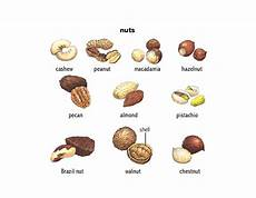 Nut Identification Chart Nut Noun Definition Pictures Pronunciation And Usage