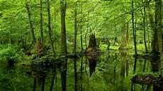Malvorlagen Urwald Europa Europas Urw 228 Lder Sch 252 Tzen Bundestagsfraktion B 252 Ndnis 90