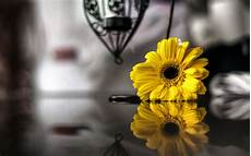 Black And White Widescreen Flower Flowers Yellow Reflection Black And White Blur