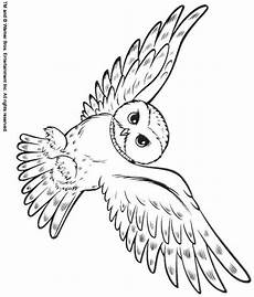 back print this snowy owl color page animal coloring