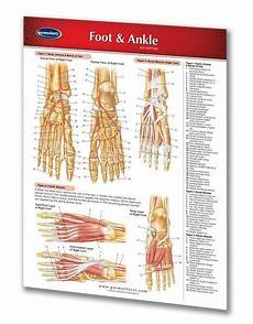Foot Anatomy Chart Foot And Ankle Chart And Reference Guide 2 Page