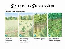 Secondary Succession Secondary Driverlayer Search Engine