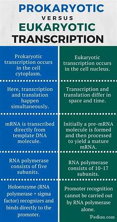 Difference Between Prokaryotic And Eukaryotic Difference Between Prokaryotic And Eukaryotic Transcription