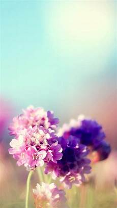 iphone wallpaper nature flowers flowers field nature iphone 5s wallpaper iphone