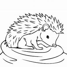 hedgehog free colouring pages