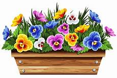 box with violets png clipart picture gallery