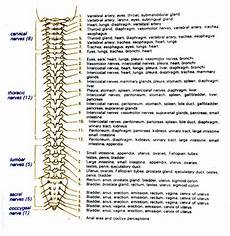 Spinal Levels Chart Spinal Cord Injury Levels And Function Chart Google