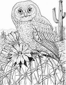 Free Owl Coloring Pages Free Owl Coloring Pages