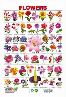 Flower Chart With Names And Pictures Spectrum Pre School Kids Learning Laminated Flowers Name