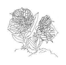 Blumen Malvorlagen Xl Blumen Malvorlagen Kostenlos Zum Ausdrucken Xl Malvorlagen