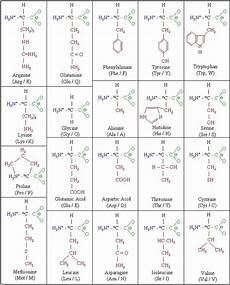 Amino Acid Benefits Chart Molecules Amino Acid Chart