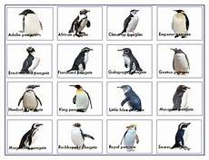 Types Of Penguins Chart Penguins Shadow Match Up Cards And Charts With Names Tpt