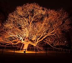 Tree Lights Tree Lighting Installation The City Arborist