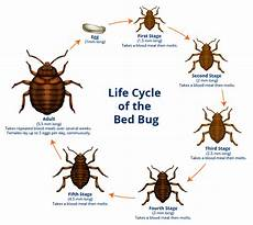 what causes farmington bed bugs infestations