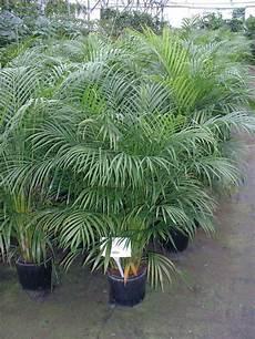 Low Light Pet Safe Indoor Plants 9 Best Pet Friendly Houseplants Images On Pinterest