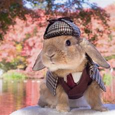 rabbit clothes for bunnies bunny puipui wears adorably distinguished costumes