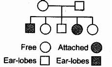 Pedigree Chart For Free Or Attached Earlobes Pedigree Analysis Mcqs Simplified Biology
