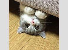 Cat Peeks From Under Sofa   LuvBat