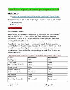 Gram Positive And Gram Negative Bacteria Chart Identification Of Gram Positive And Gram Negative Bacteria
