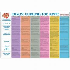 Puppy Exercise Chart Age Appropriate Exercise Poster Puppy Culture