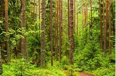 Malvorlagen Urwald Europa Nationalpark Belaweschskaja Puschtscha Wei 223 Russland