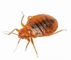 bed bug treatment all solutions pest