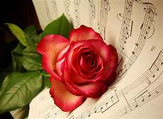 Flower Wallpaper Song by Musical Flowers Nature Background Wallpapers On