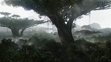 Rainforest Background Imelda Mcconnell Rainforest Wallpaper