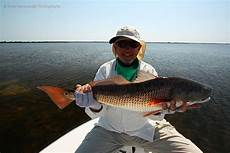 Light Tackle Mosquito Lagoon Redfish Orlando Redfish Florida Red Drum